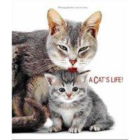 Catslife